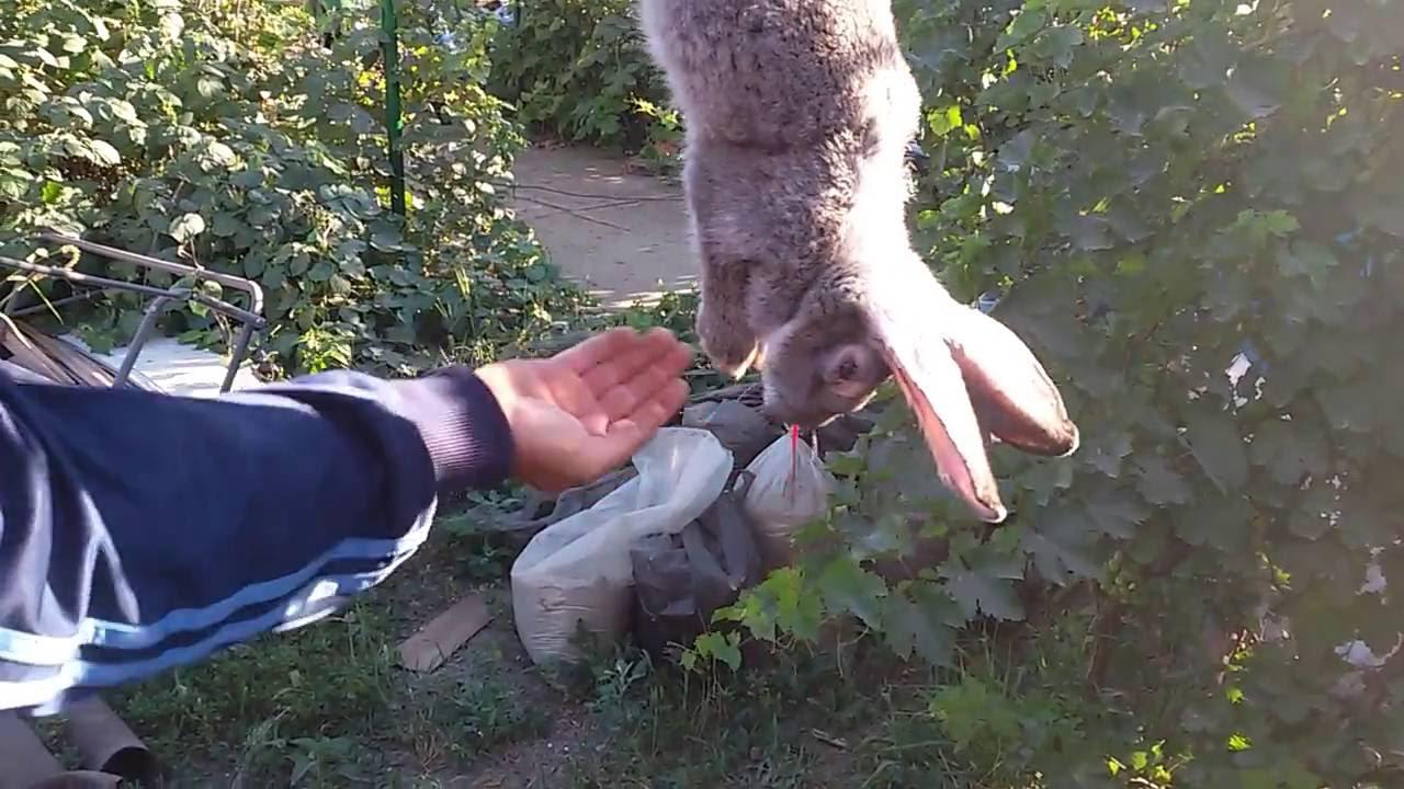 картинка убой кроликов почитай