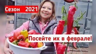 Сезон 2021: что посеять в феврале? Лунный календарь. Какие овощи и цветы сеять в феврале. Секреты