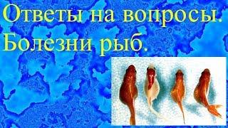 Ответы на вопросы. Болезни рыб.