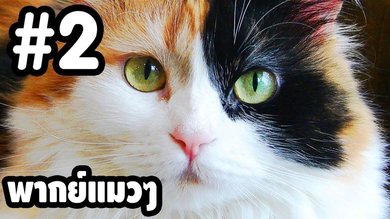 พากย์แมวๆ เดอะ ซีรี่ย์ - Season 1 Ep.2「นายหัวฟ้า」ตลกฮาเกรียน