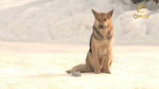 Собаки на улице_09.02.2017_Соль-ТВ
