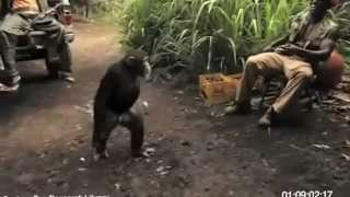 Monkey With AK-47 Full video