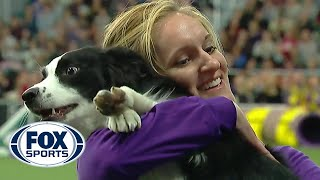 P!nk the border collie wins backtoback titles at the 2019 WKC Masters Agility | FOX SPORTS