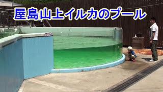 香川県屋島水族館イルカのイタズラ 2015年(夏) thumbnail