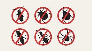 recunoașterea insectelor medicamente în tratamentul negi genitale în gură