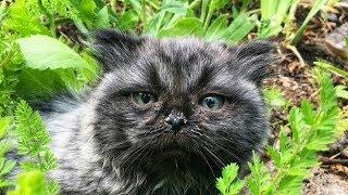 Двое одиноких котят пришли из лесу… Люди долго не могли понять, что не так с одним из них