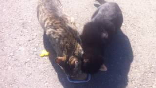 Шок!!! Голодные коты нападают на экипаж!!!