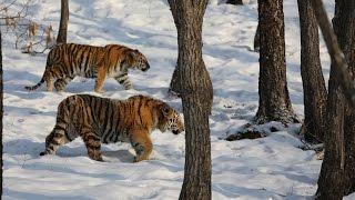 Яркий фильм о животных Приморского Сафари парка