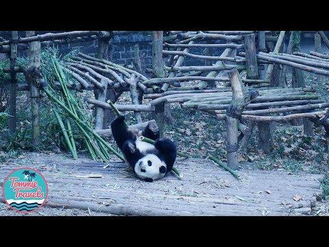 Travelling Chengdu - Vlog 1 2018
