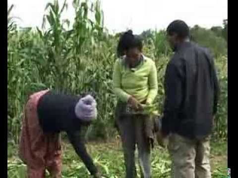 In the African Diaspora with London farmer born in Zimbabwe.