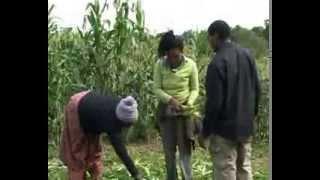 In the African Diaspora with London farmer born in Zimbabwe.