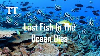 What If After The Last Fish In The Ocean Dies