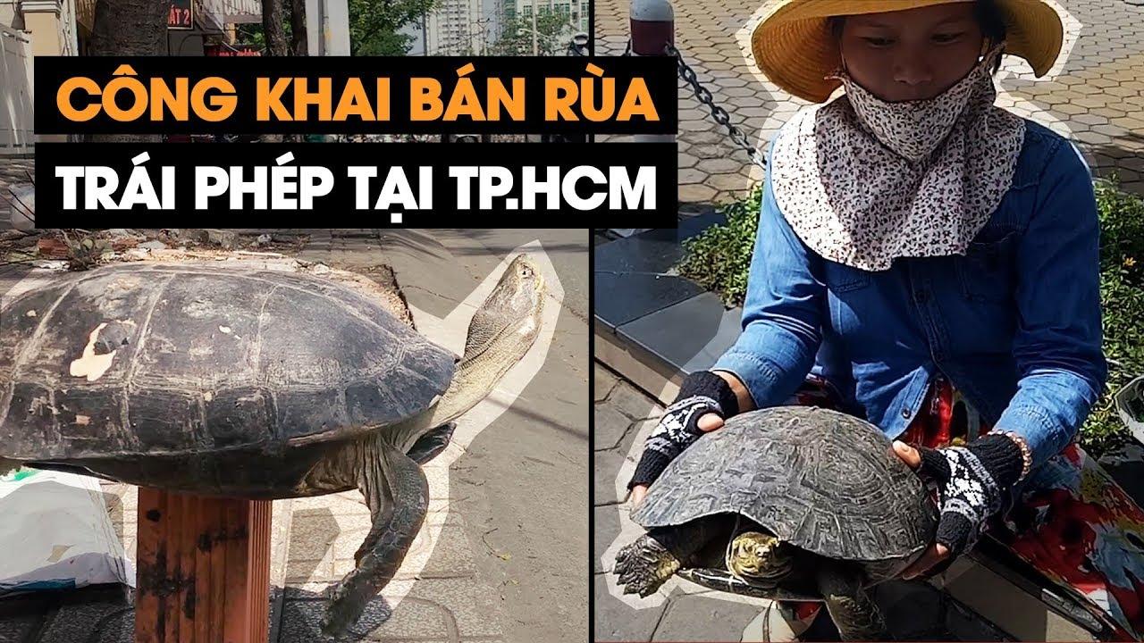 ĐIỀU TRA | Rùa nguy cấp quý hiếm bán tràn lan trên vỉa hè TPHCM với thủ đoạn tinh vi