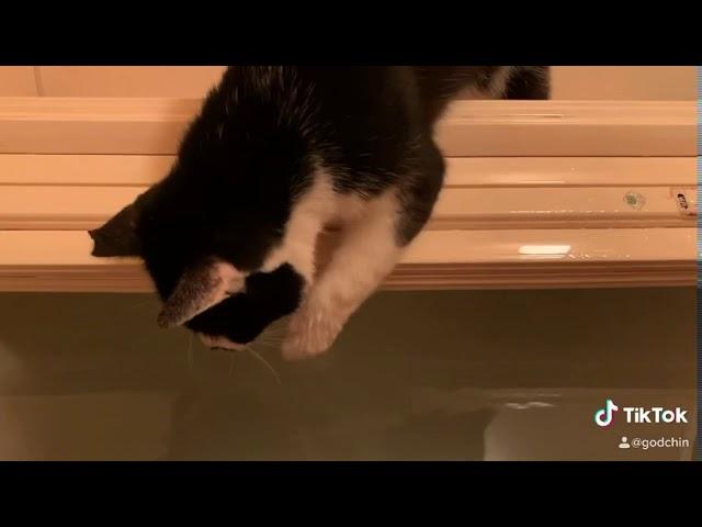 rescue cat 溺れてる僕を助けてくれる猫