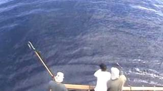 Марлін 250 кг. - ця величезна риба в стрибку зачіпає барбекю!