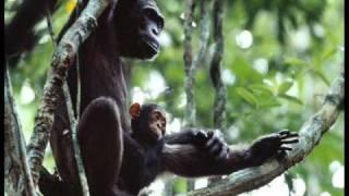 Beautiful World - In Existence - Africa - Dla Zielonych Oczu Nocy Milej :)