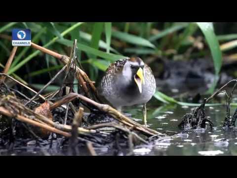 Earth File: Focus On Migratory Birds Pt. 2