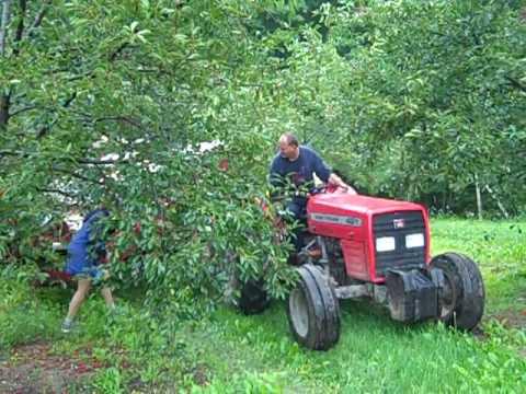 Cherry Harvesting at Shimeks' Maple Ridge Orchard - Maple City, MI - August 2009