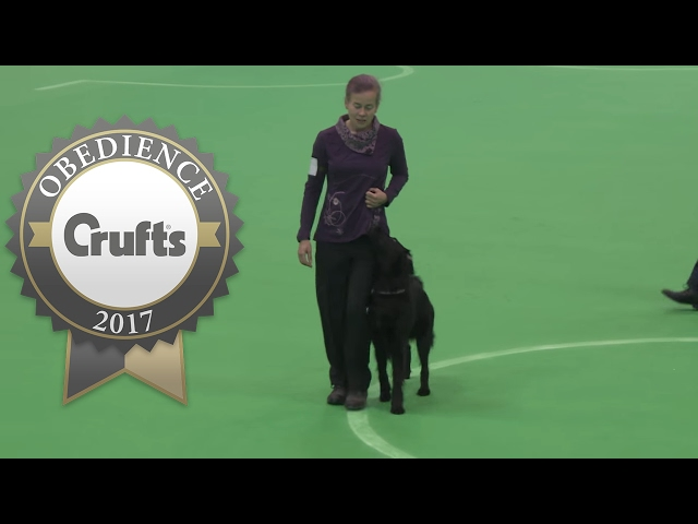 Obedience Championship - Bitches - Part 2 | Crufts 2017