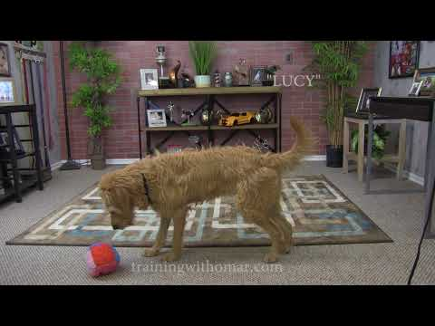 How To Train Your Dog To Do A Backflip