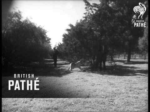 Police Dog Training 1962