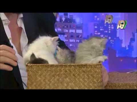 Adnan Oktar ve harika kedileri!