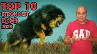 TOP 10 STRONGEST DOGS IN THE WORLD || Show and Guard Dogs || Aggressive Dogs || Baadal Bhandaari