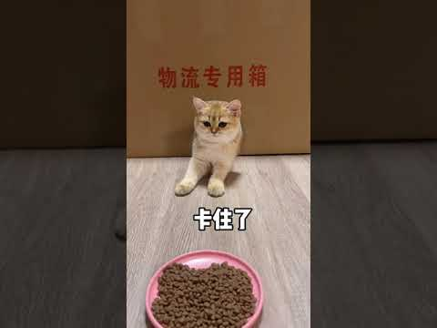 【牛奶是只猫】猫咪柔软度测试~小老三是什么做的?