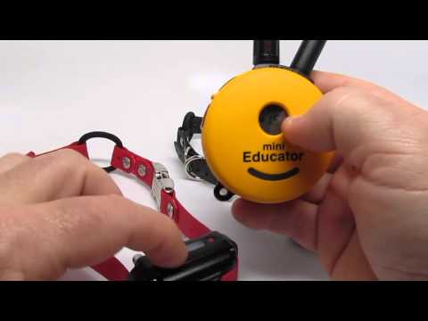 E-Collar Technologies Mini Educator NEW ET-300 (add a 2nd Dog)