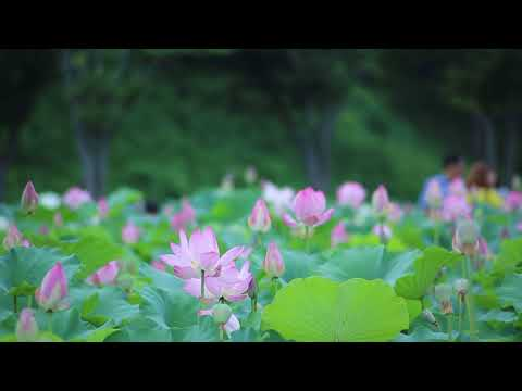 Soft Music with Meditation || Free Background Video & Music For You tube No Copyright ||