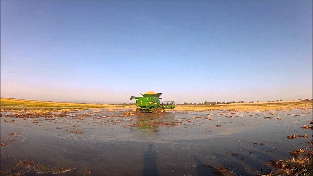 John Deere Tracks In Flooded California Rice Field