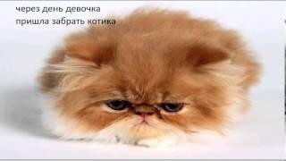 история маленького котенка ( картинки с надписями ) :3
