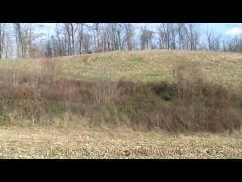 Oak Hill Bluetick Beagles