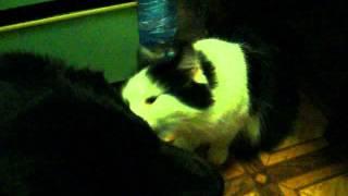 кошка извращенка