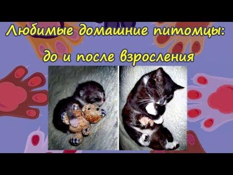 ДОМАШНИЕ ПИТОМЦЫ ДО И ПОСЛЕ  Pets Before And After Забавные фото