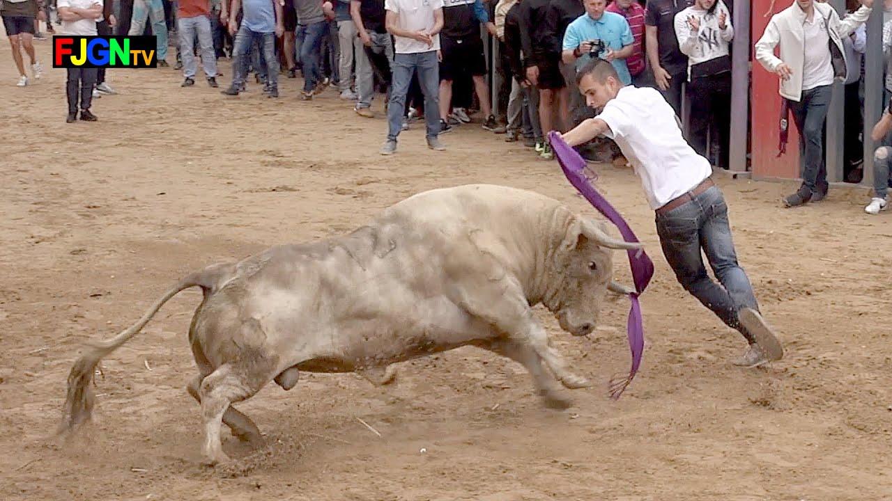 8 Toros cerriles Fiestas Sant Pasqual 2019 - Vila-real (Castellon) Bous Al Carrer [Toros FJGNtv]