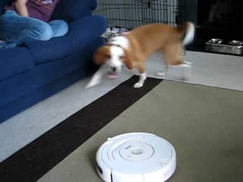 Dog vs. Roomba