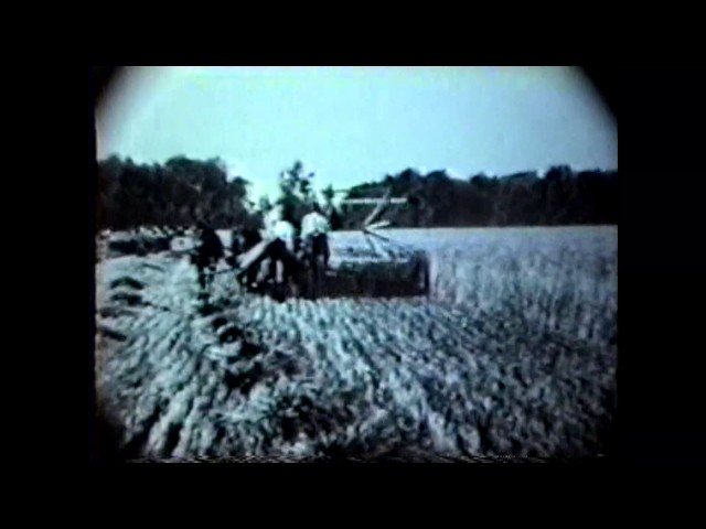 Miner's Heart's Delight - Wheat Harvest - 1920's