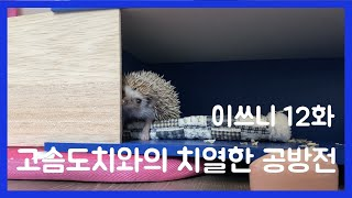 이쓰니 12화 - 고슴도치와의 '치열한' 공방전