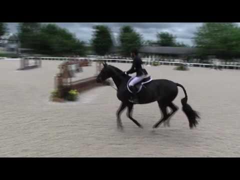 Video of MARKET TREND ridden by ADAM EDGAR from ShowNet!