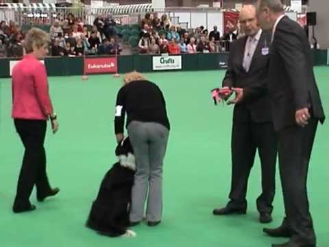 Crufts 2012 Bitch Obedience Championships Margaret Ward and Amazing Flyte to Fame