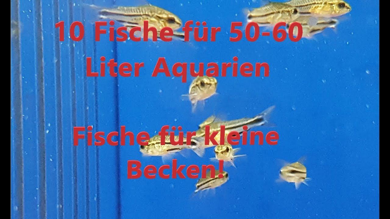 10 Fische Für 50 60 Liter Aquarien Teil