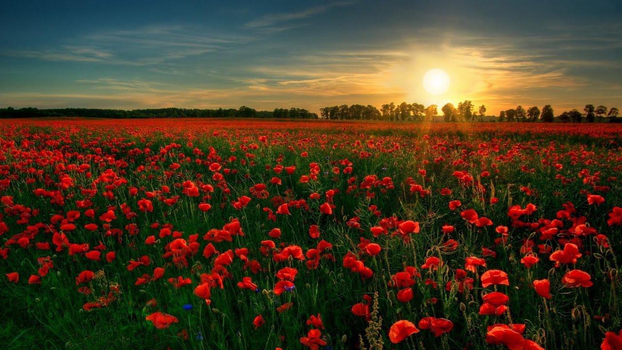 Download Surah Maryam (Be Heaven) سورة مريم Omar Hisham Al Arabi مع مناظر طبيعية رائعة
