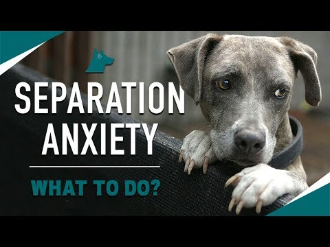 How To STOP Your Dog's Separation Anxiety (MUST TRY)