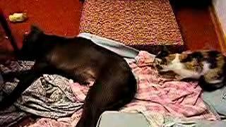 Кошка ворует кость у собаки 1