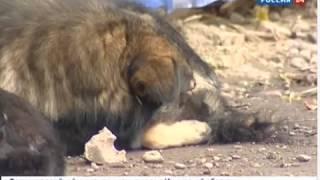 Бродячие собаки загрызли щенка добермана в Иркутске