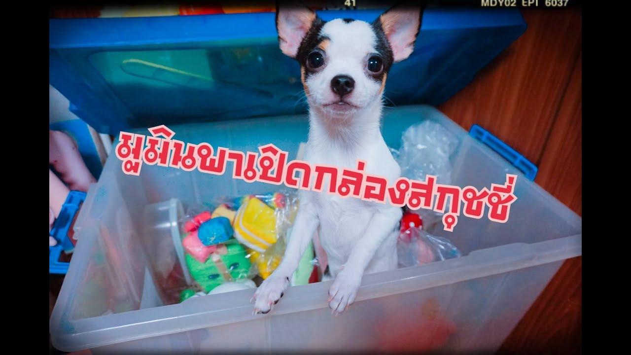มูมินพาเปิดกล่องสกุชชี่ทำเอง #ทาสหมา #เปิดกล่อง