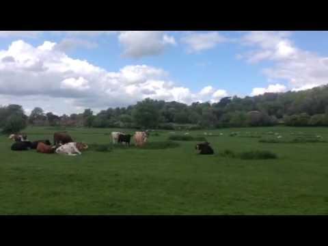 Hambleden Valley -An Area of outstanding natural beauty