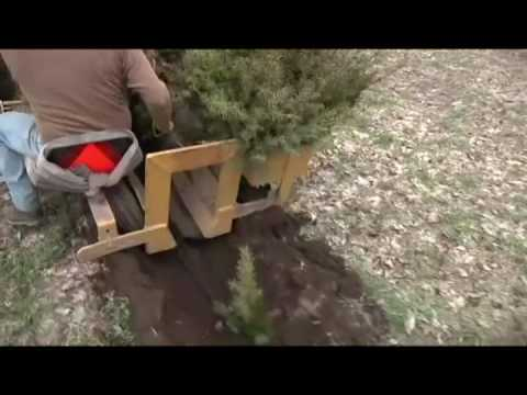 Spring Planting of Douglas Fir | Dutchman Tree Farms