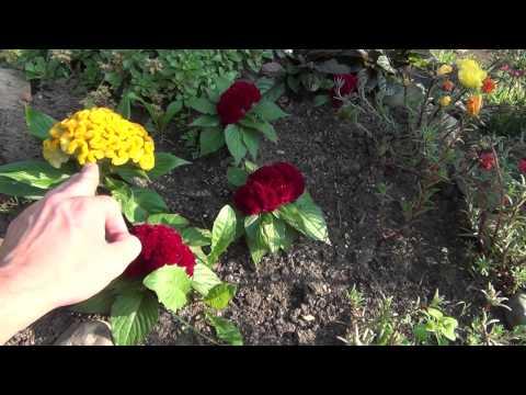 Как сделать цветник или миксбордер? Цветник своими руками.. Многолетние цветы для клумбы.
